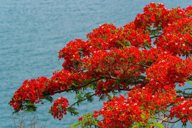 Red flowers in nature stock images