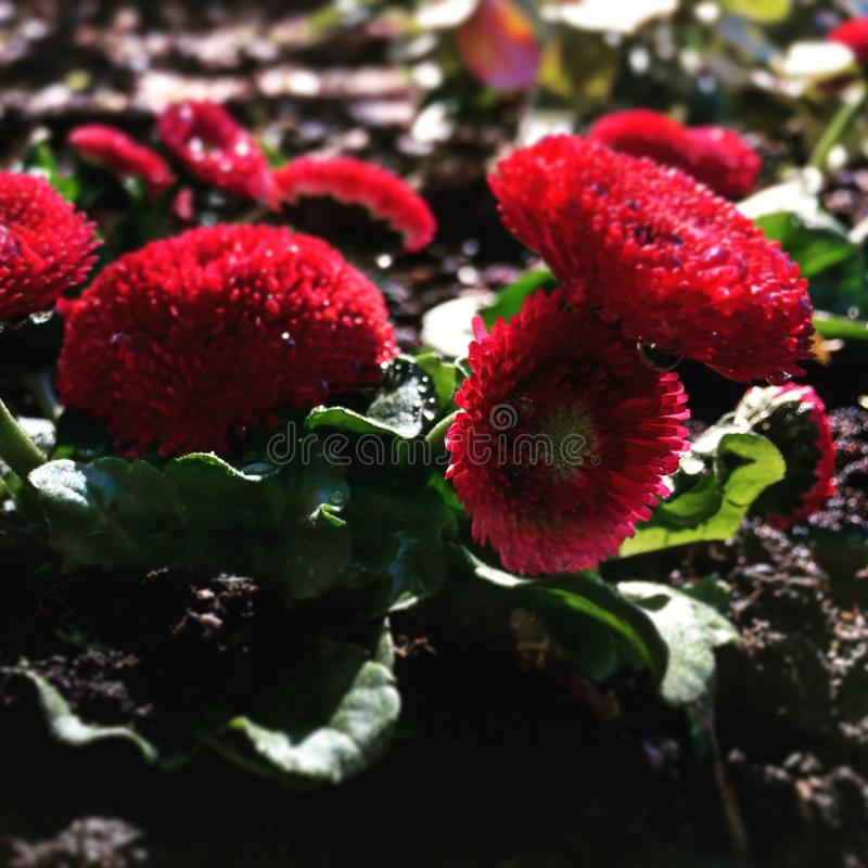 Red flowers stock image