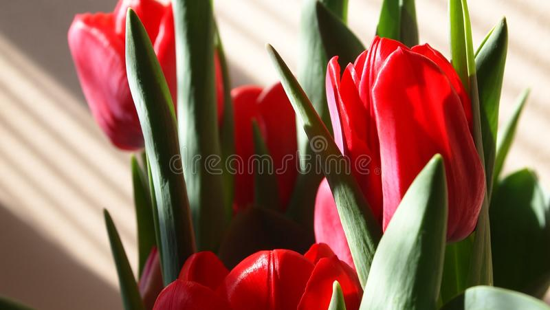 Red flowers. Photo taken with an Olympus Pen camera royalty free stock images