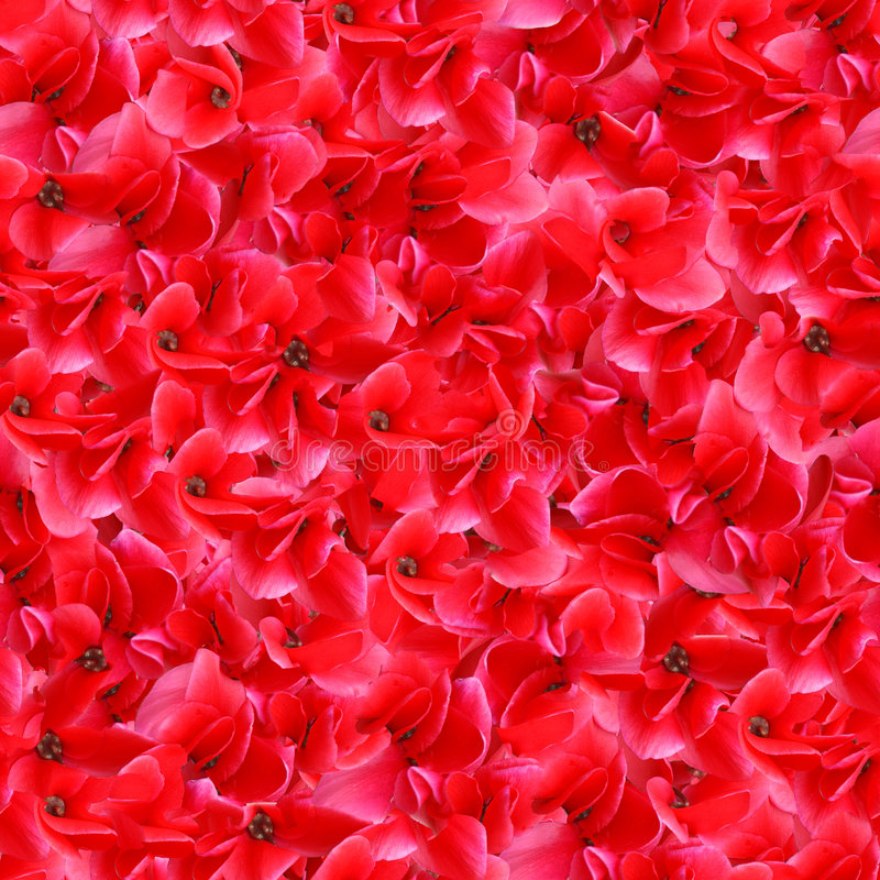 Red Flowers Seamless Pattern royalty free stock photography
