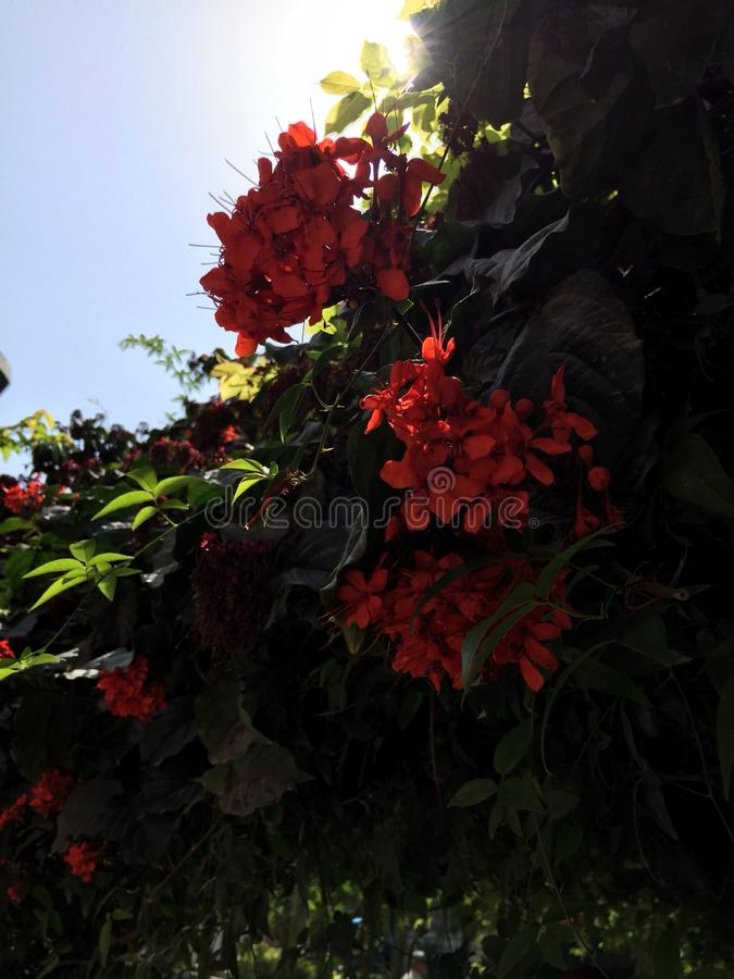 Red Flowers Shrub. With sky above stock photography