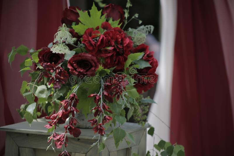 Red flowers in a vase on a background of red and white fabric drapery royalty free stock image
