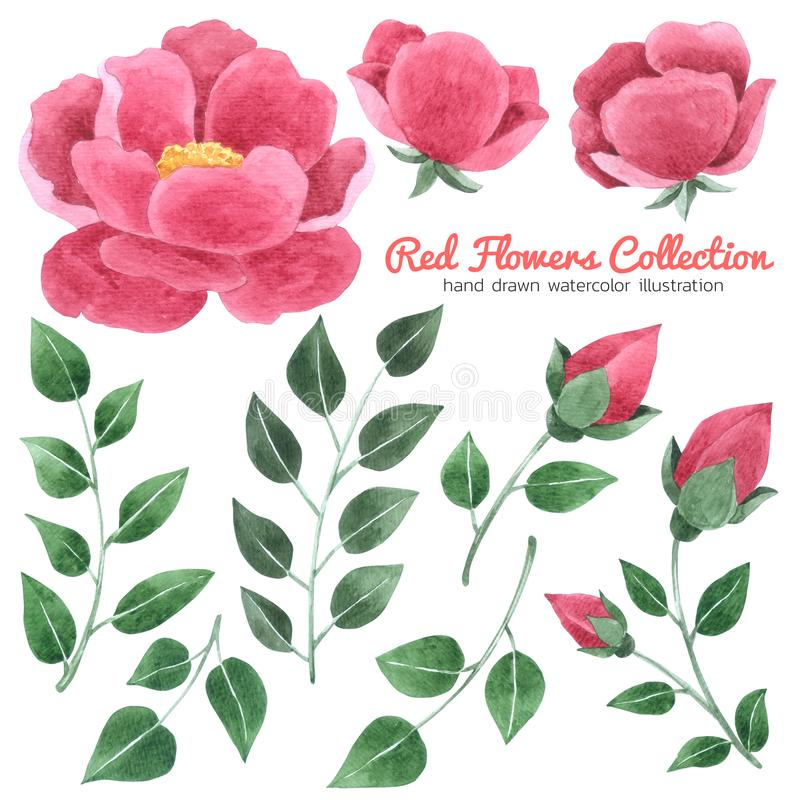 Red Flowers watercolor collection on white background , Hand drawn for Greeting Card , Wedding Card, Cases design, Postcards, Pr stock illustration