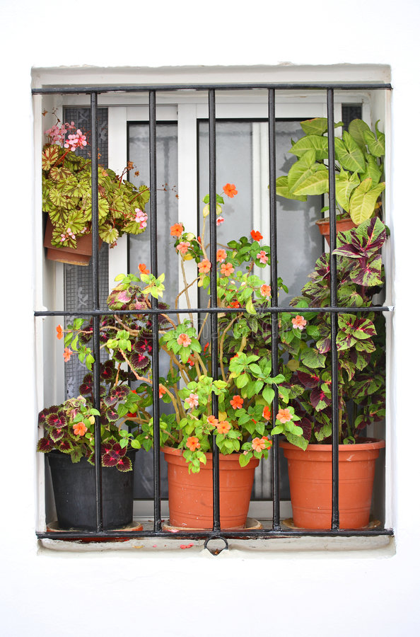 Red Flowers In Window Royalty Free Stock Photo