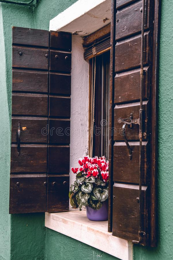 Red flowers in a window ledge in Murano. Italy royalty free stock images