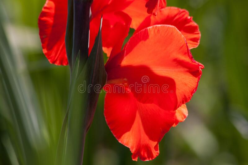 Red Flowerss Free Public Domain Cc0 Image