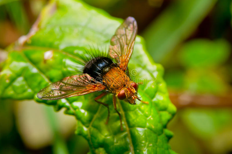 Download Red Fly On A  Leaf In The Rainforest Stock Image - Image of detail, legs: 26851755