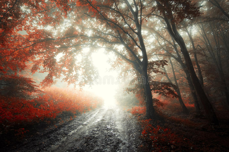 Red forest with fog in autumn stock photos