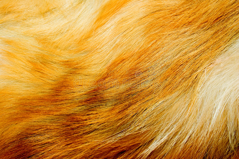 Red fox fur. Background texture stock photography