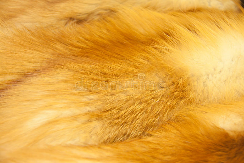 Red fox fur. Background texture stock images