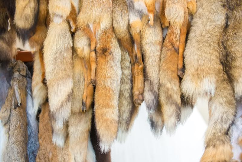 Red Fox pelts hanging in the window at the fair. Red Fox pelts with fluffy tails hang in the window at the fair stock images