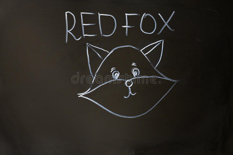 Red fox portrait on black board background royalty free stock images