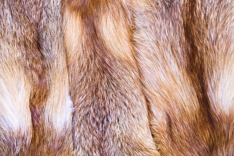 Red fox skin. Fox fur with pied beautiful hairs.  royalty free stock image