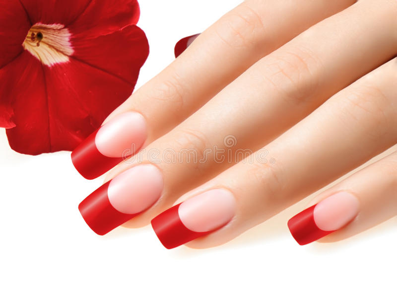Red french. royalty free stock photography