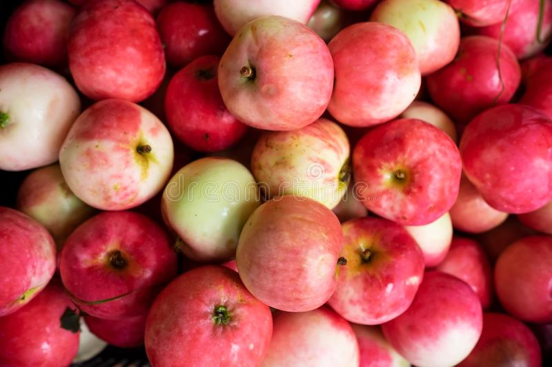 Red fresh apples background. Concept of autumn harvest. royalty free stock photo