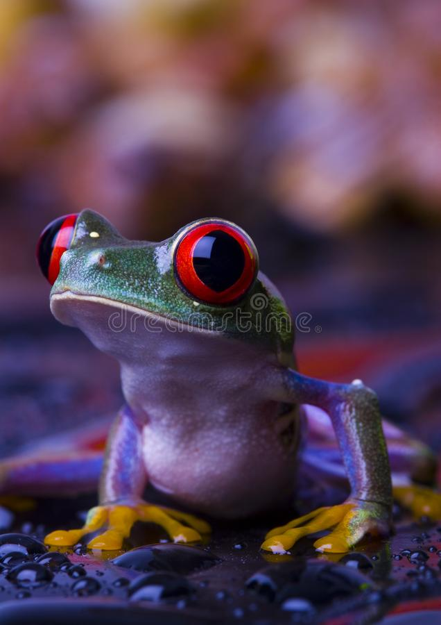 Red frog stock photos