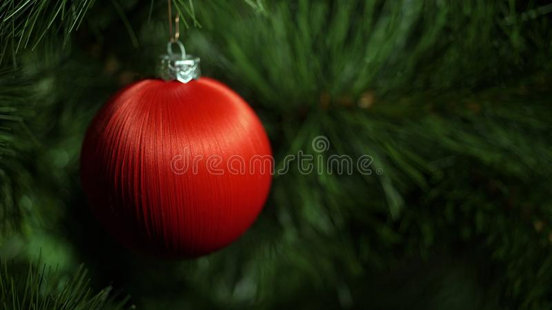Red fur-tree toy on a green Christmas tree. 4K UHD 3840x2160 Video Clip royalty free stock photo