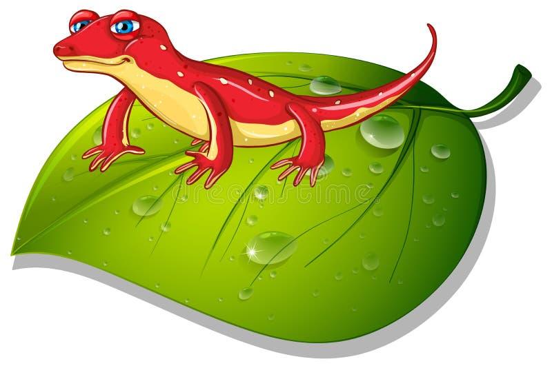 Red gecko on green leaf stock illustration