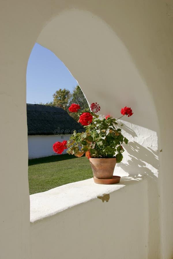 Download Red geranium stock photo. Image of hungary, europe, village - 6564656