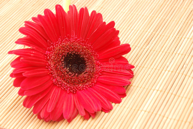 Download Red Gerbera On Bamboo Royalty Free Stock Images - Image: 4314729