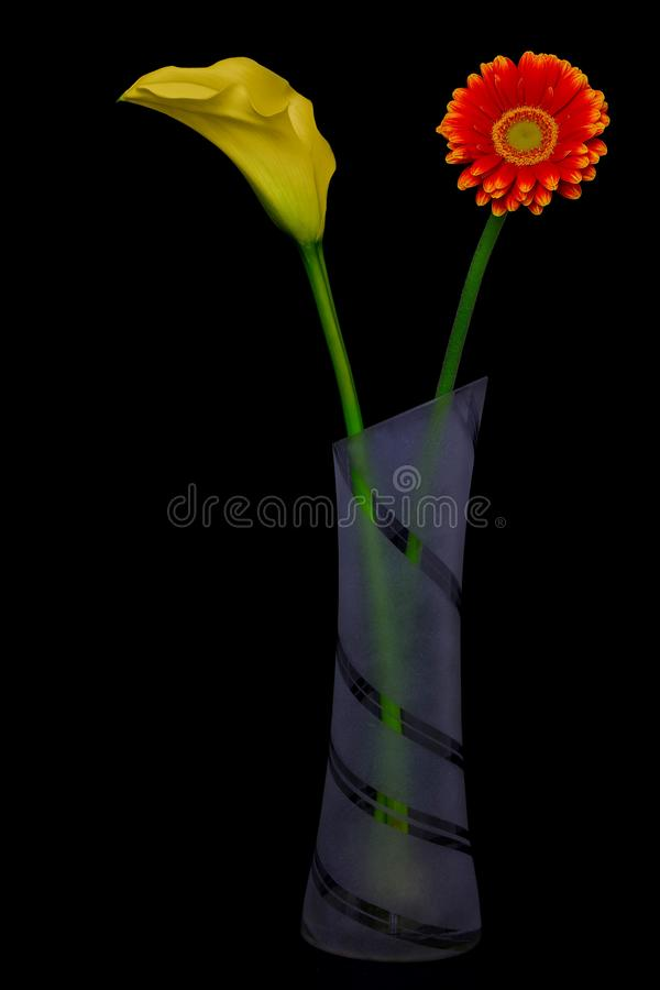 Red gerbera daisy and a yellow calla lily in a elegant glass vase against black background stock photo