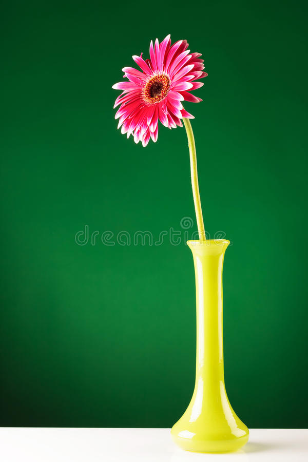 Red gerbera in yellow vase on green screen stock photography