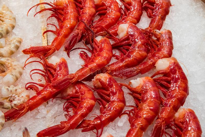 Red giant prawns for sale at a market royalty free stock photo