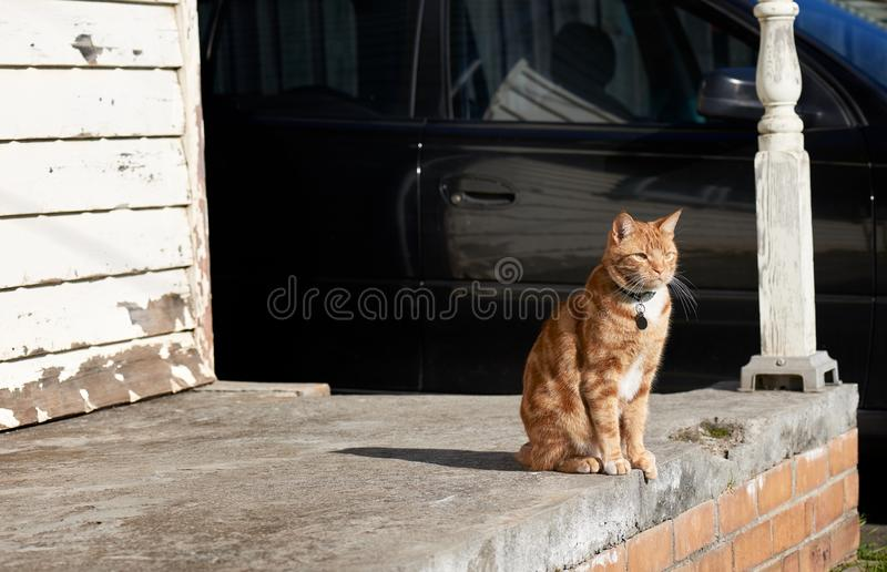 Red ginger tabby cat sitting on a concrete porch of weathered house with a black car in the background. royalty free stock photos
