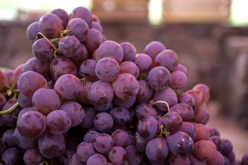 Red Globe Grapes stock photo
