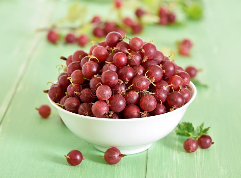 Red gooseberries in bowl stock images