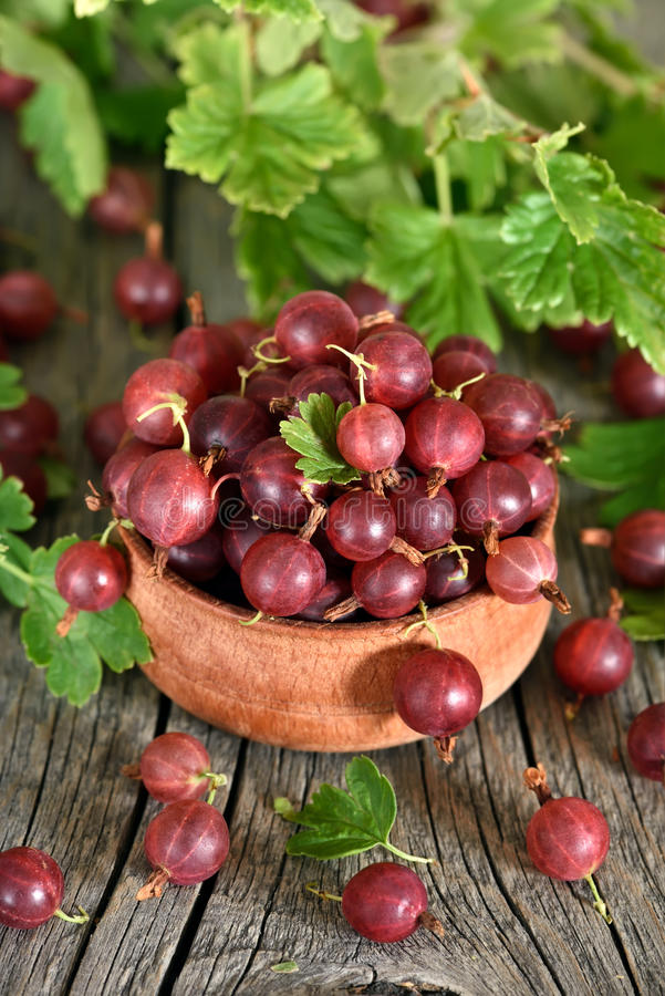Red gooseberries in bowl stock photography
