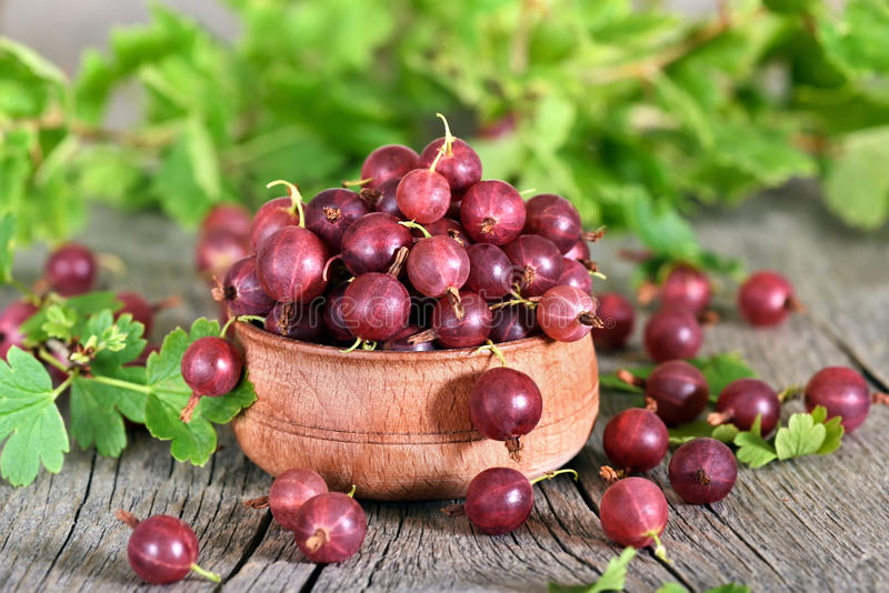 Red gooseberries on country table stock image