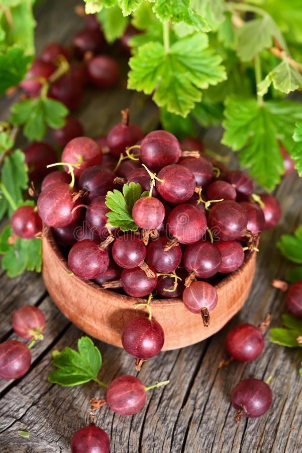 Red gooseberries in wooden bowl stock photo