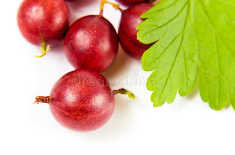 Download Red Gooseberry On A White Background Stock Image - Image of leaf, ripe: 26032629