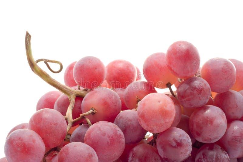 Red grape close-up stock photo