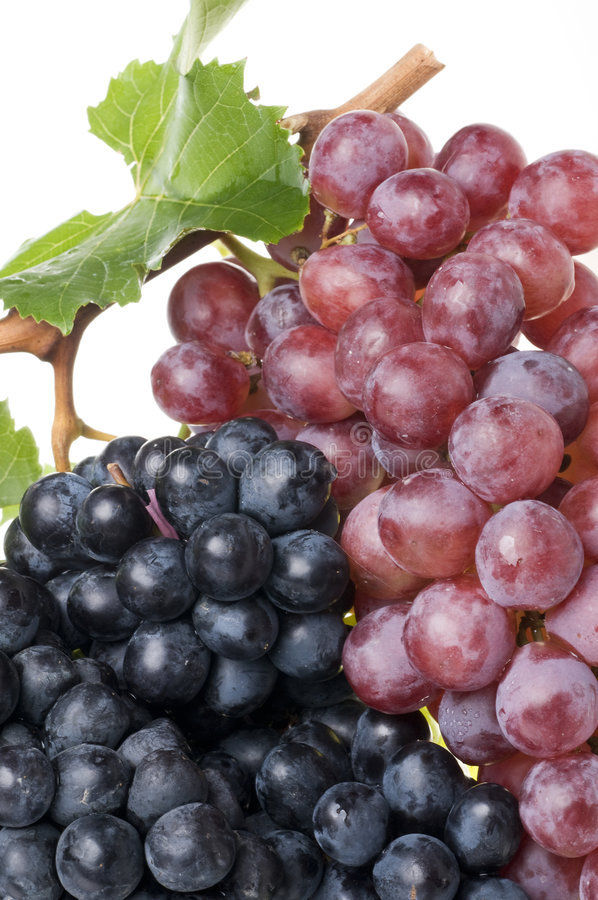 Red grape food close-up stock image