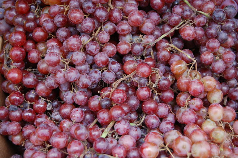 Download Red Grapes stock photo. Image of bunch, fruit, healthy - 24436048