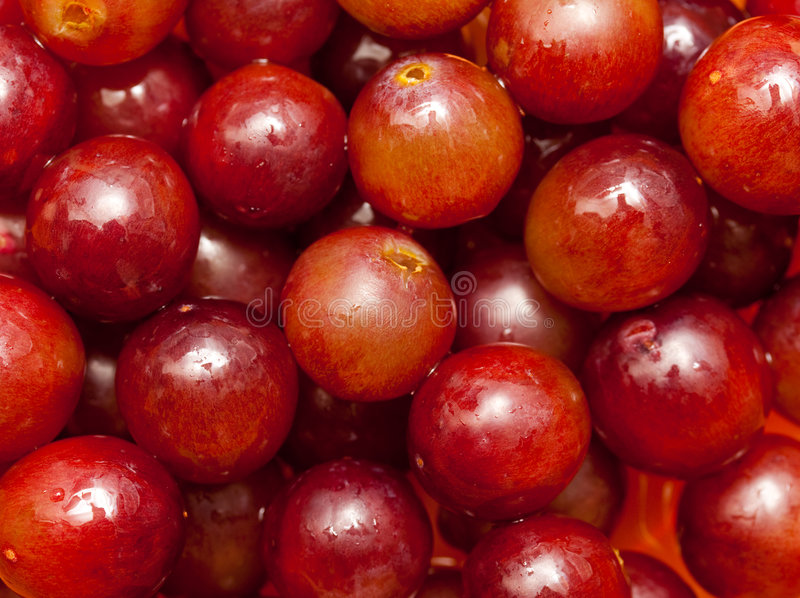 Download Red grapes stock image. Image of organic, colour, food - 8536187