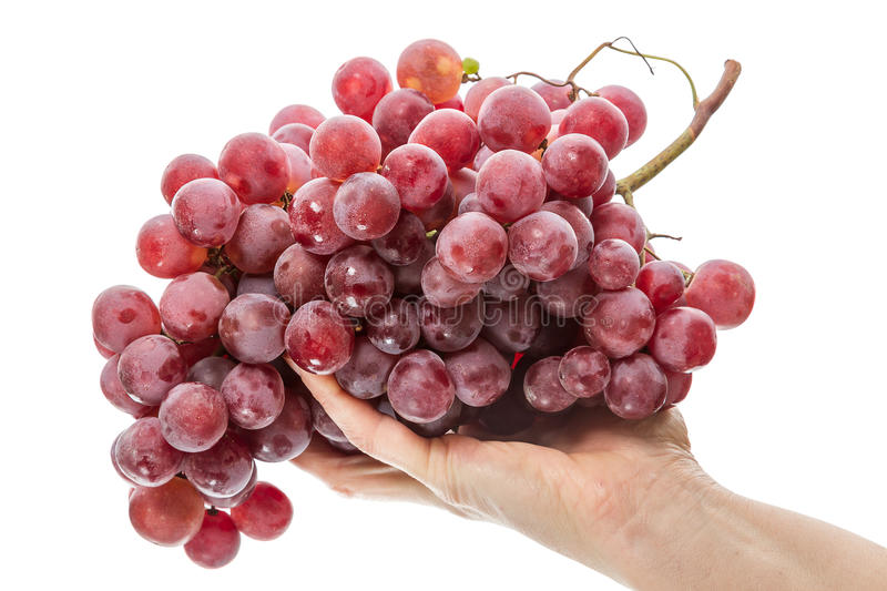 Red Grapes In The Palm Royalty Free Stock Image
