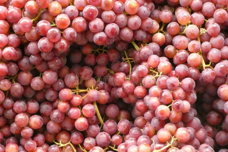 Red Grapes. For sale in Romeral, Chile. Can be used as background royalty free stock photos