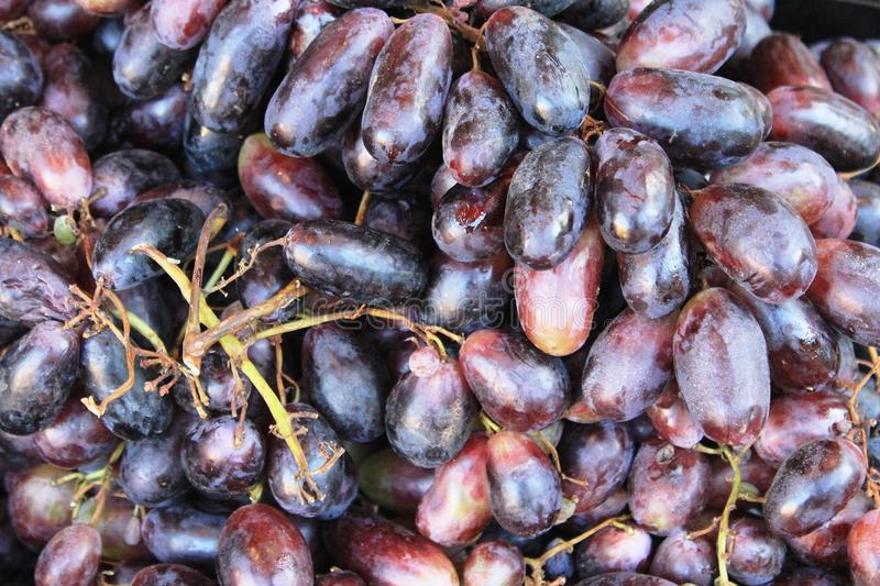 Red grapes in the shop in Bulgaria. Photo of red grapes. Delicious fruit full of vitamines. Organic and yummy , good as snack or addition to breakfest or desert stock image