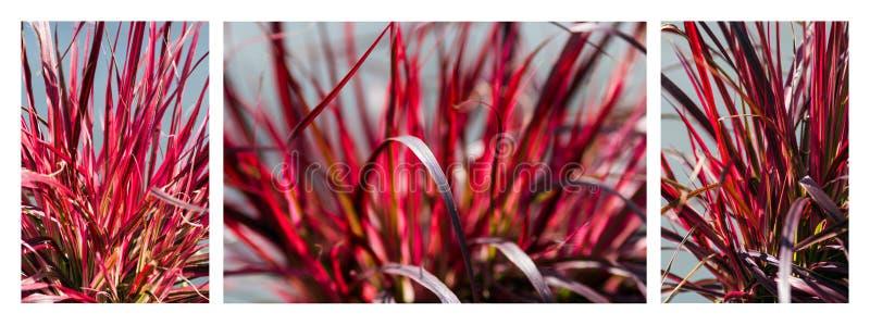 Red Grass Trio stock photo