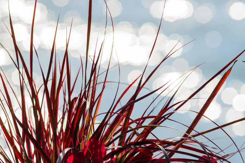 Red grass white light and water stock photos