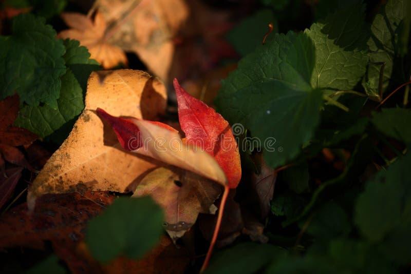 Red&Green fotografia stock