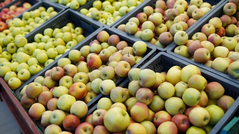 Red and green apple fruits in a supermarket . fresh apples store background royalty free stock images