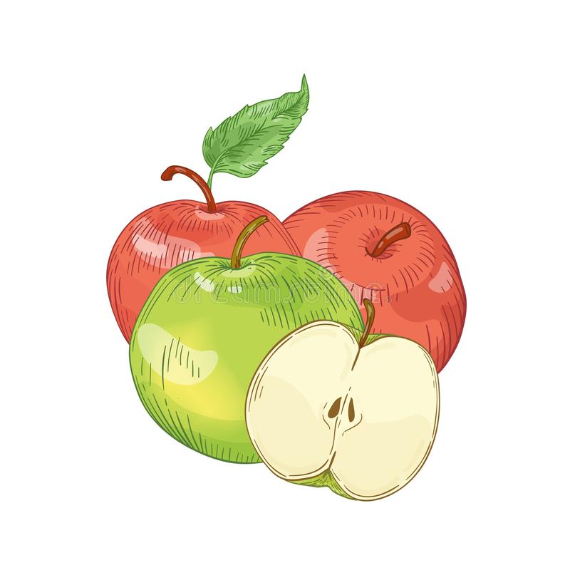 Red and green apples hand drawn vector illustration. Whole and half cut seasonal fruit with leaves isolated on white royalty free illustration