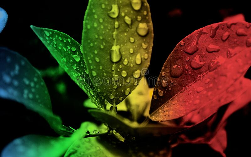 Red Green and Black Leaf Edited Focus royalty free stock photo