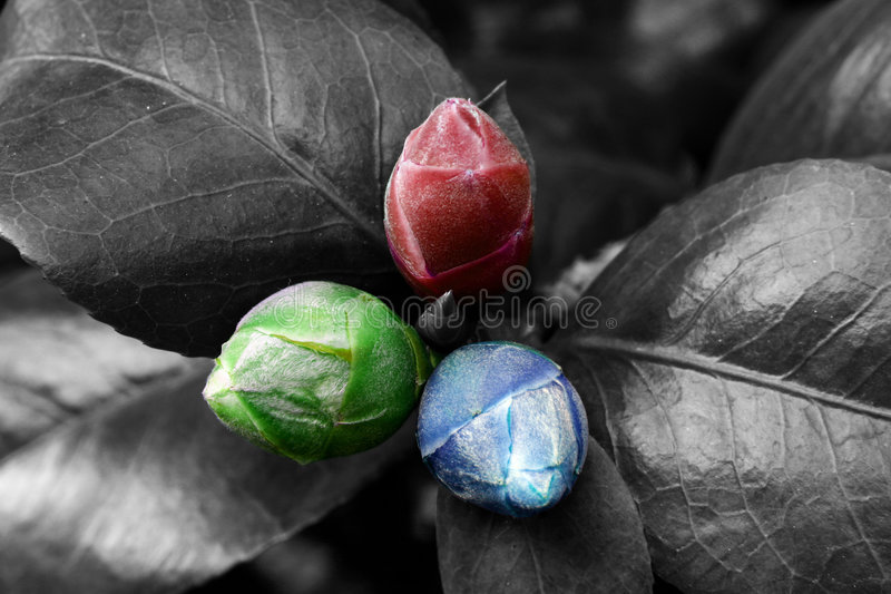 Red green and blue nature stock photo