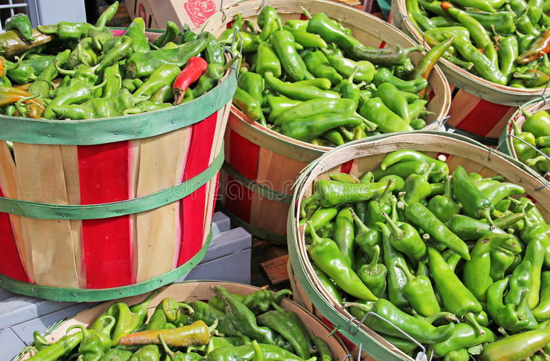 Red and Green Chili in bushel baskets for sale. Red and Green Chili picked at harvest in wooden bushel baskets for sale stock photo