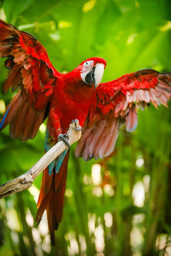 Red-and-green macaw. Sitting on branch over blue sky royalty free stock photo